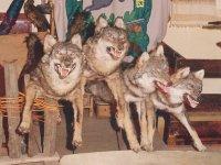 Dragačevski vukovi