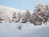 """Lovište """"Dragačevo"""" zimi"""