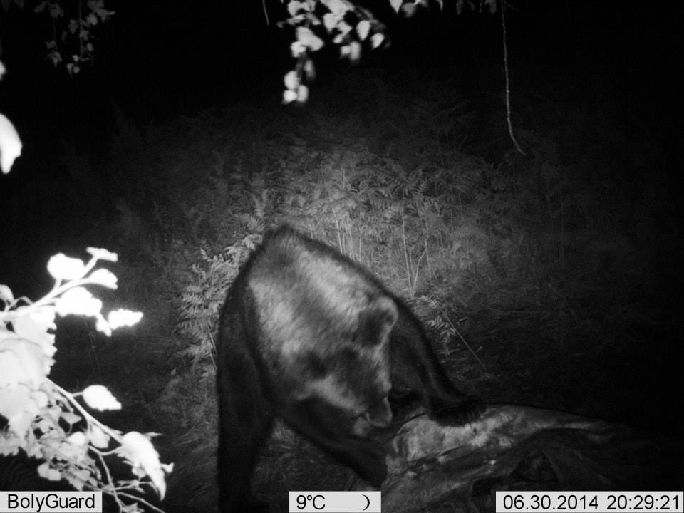 Snimak noćne kamere